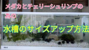メダカの水槽サイズアップ作戦!!