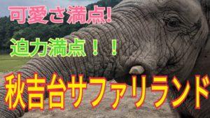 秋吉台サファリランドで動物とのふれあいを楽しもう!!